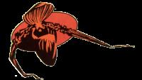 Orchideeënvereniging Vlaanderen